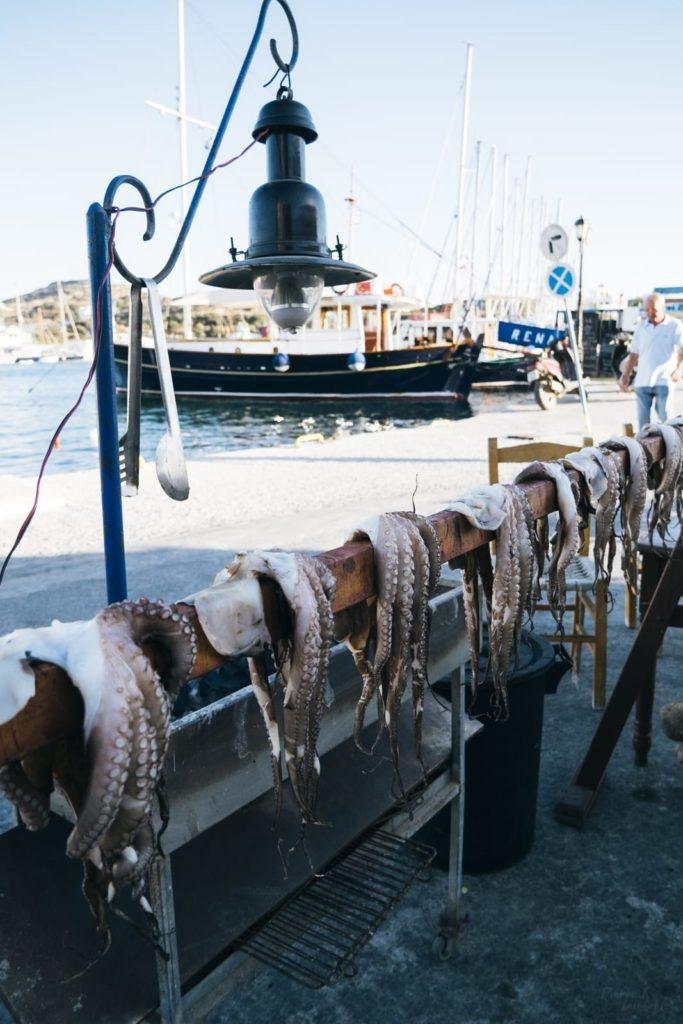 lipsi marina octopus