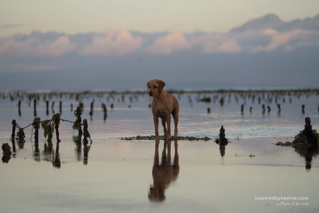whales and waves, sumbawa, west sumbawa, kertasari beach, myamo beach lodge, maluk beach, where to stay in sumbawa, hotels sumbawa, beach sumbawa, sumbawa things to do, sumbawa where to go