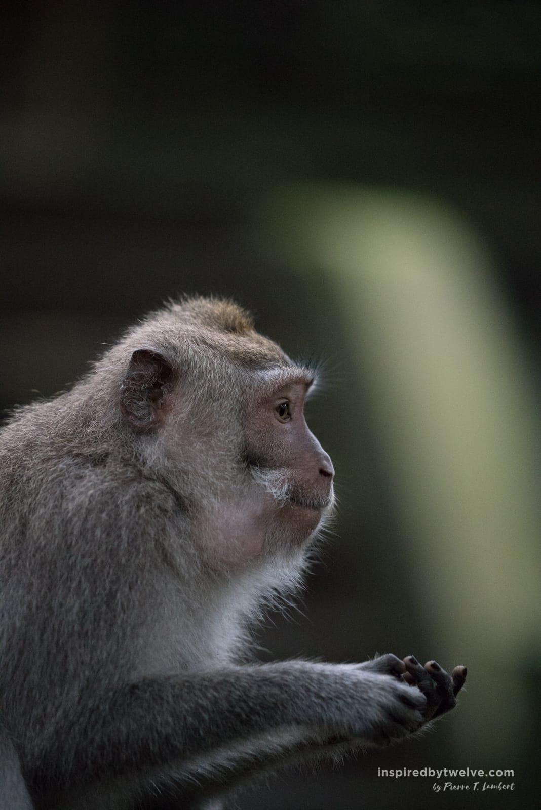 ubud monkey forest, Ubud Guide, Top Things To Do Ubud, Ubud Bali, Ubud Travel, What to do in Ubud, Restaurants Ubud, Hotels ubud, Where to stay in Ubud