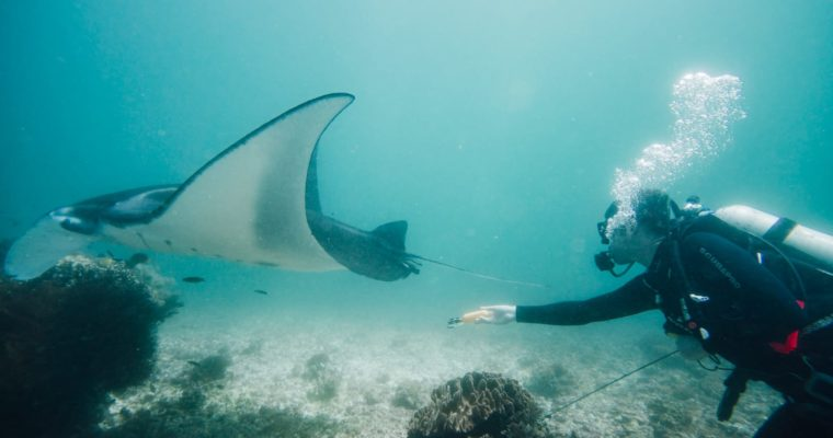Komodo Islands Diving Review