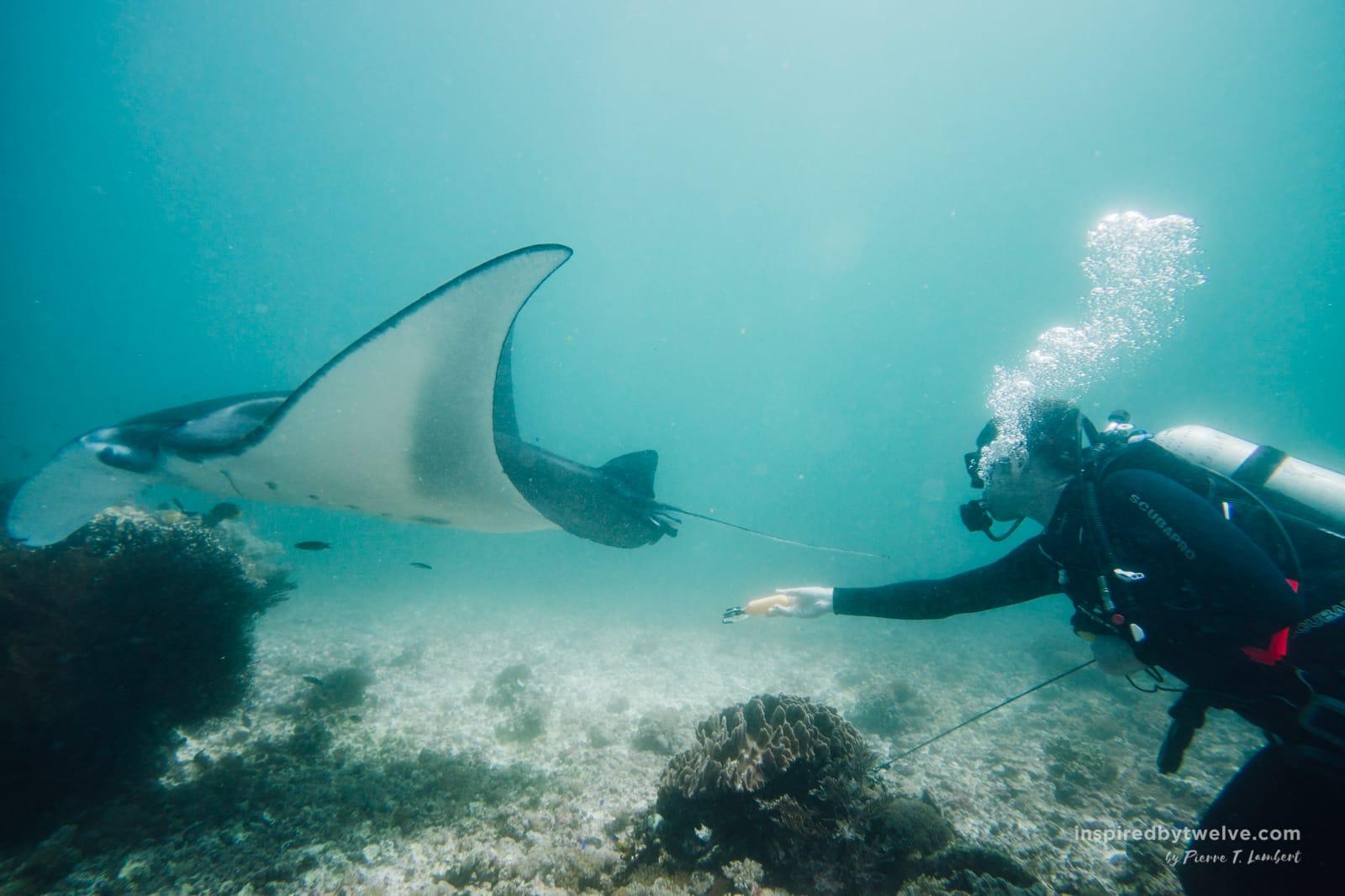 Komodo Islands Diving Review
