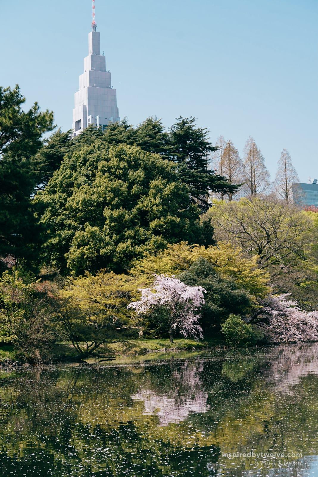 Shinjuku Gyoen, Tokyo Travel Guide, 24 Hours in Tokyo, what to do in tokyo, tokyo itinerary