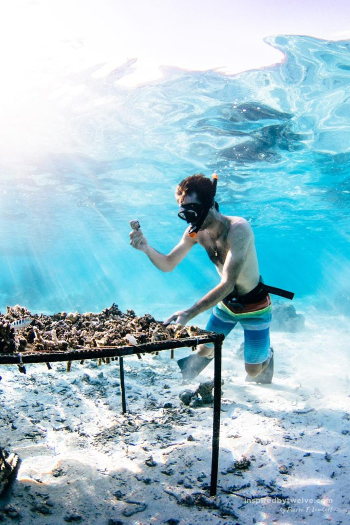 moorea french polynesia snorkeling coral gardeners
