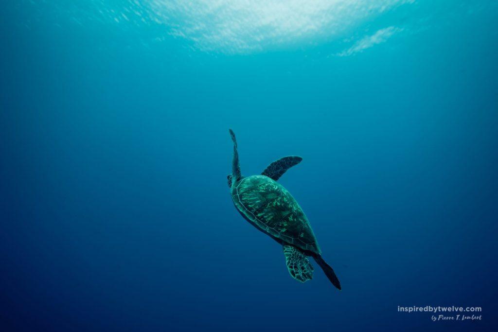 diving french polynesia tahiti top dive