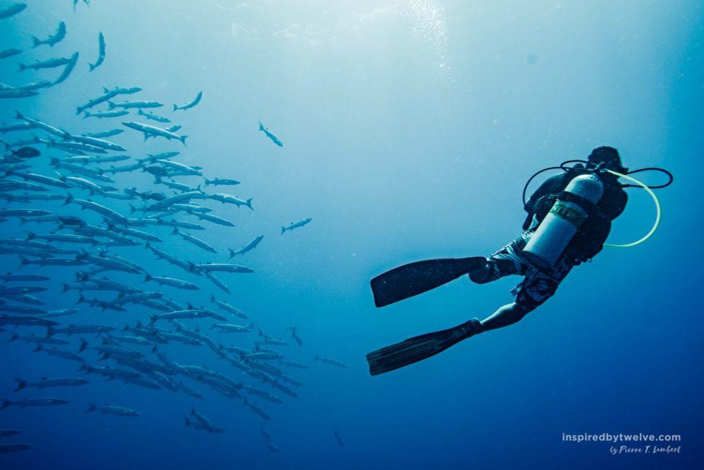 diving top dive rangiroa