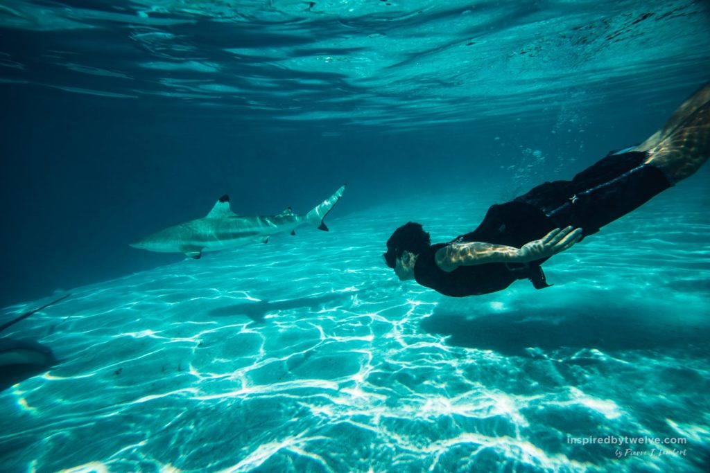 shark swimming bora bora
